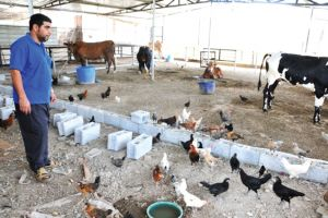 مزارعون تقدموا للاستفادة من دعم «تمكين» يشكون تكبدهم خسائر