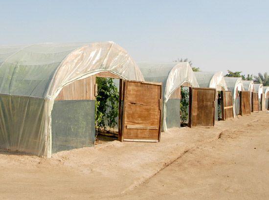 مزارع تستخدم طريقة الزراعة دون تربة بداخل محميات توفيراً للجهد والمياه والمساحة-تصوير عقيل الفردان