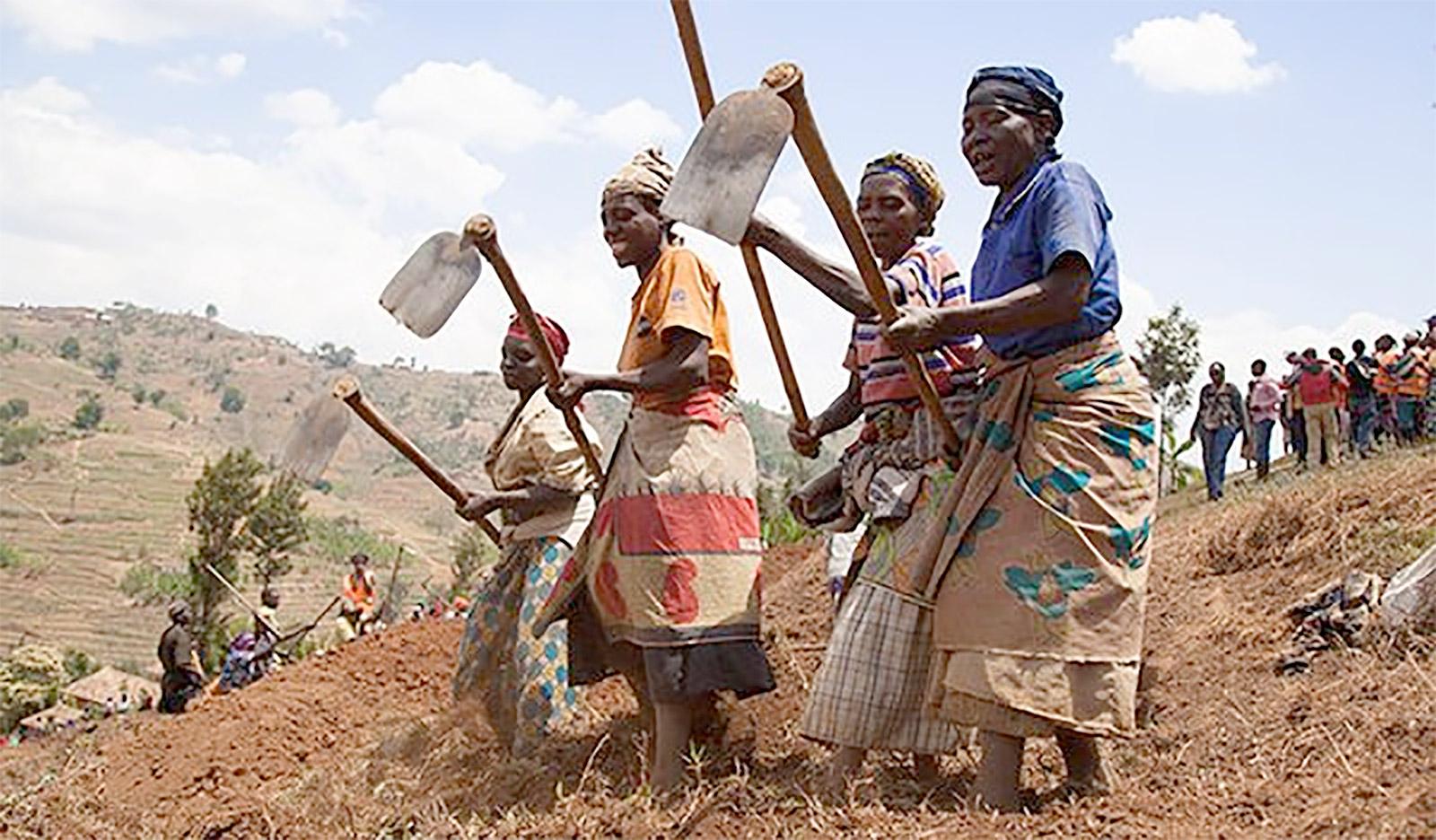 النساء يقمن بإعداد المصاطب والأرائك في مزرعة في رواندا