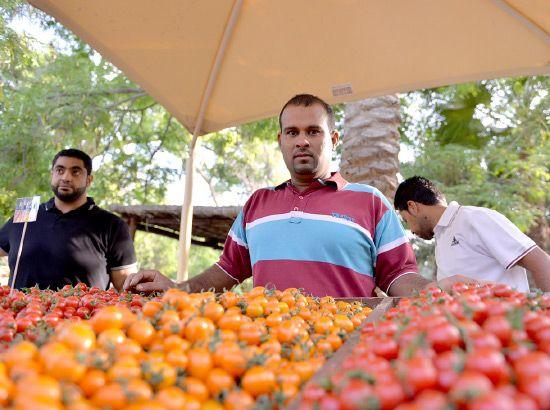 مزارع بحريني يقدم ألواناً مختلفة من الطماطم البحريني أمس