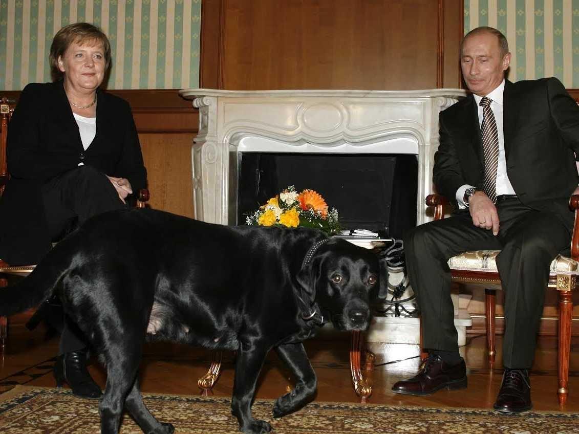 كلبة بوتين أثناء دخولها الاجتماع  (أرشيفية)