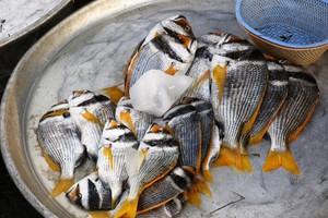 شاهد صور ارتفاع اسعار الاسماك في الاسوق المحلية