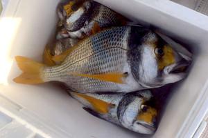 ارتفاع سعر السمك بسبب الوقود والاحوال ...