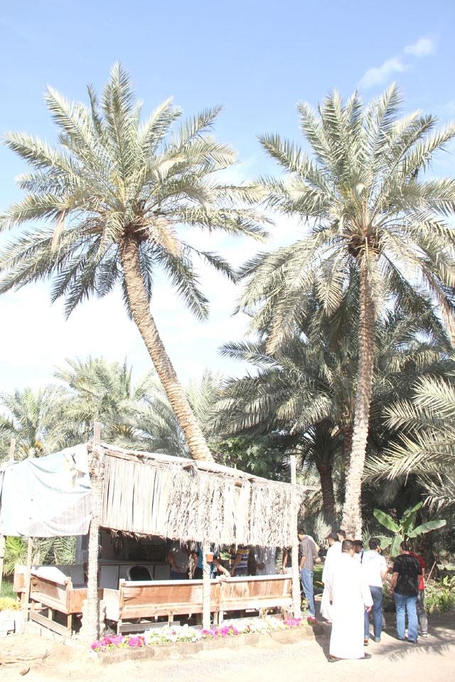 النخيل الباسقات يستقبلن الزائر لمزرعة آل إبراهيم