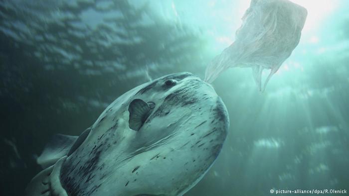 الفضلات البلاستيكية تتفتت في الغالب إلى قطع صغيرة وتنتشر في مختلف أنحاء البحار، وهذا ما يجعل حيوانات البحار تلتهمها اعتقادا منها بأنها طعاما