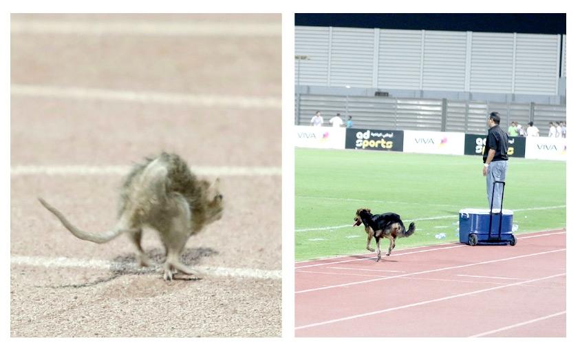 الكلب لدى اقتحامه مباراة الرفاع الشرقي والحالة-الفأر يتجول في مضمار استاد البحرين الوطني