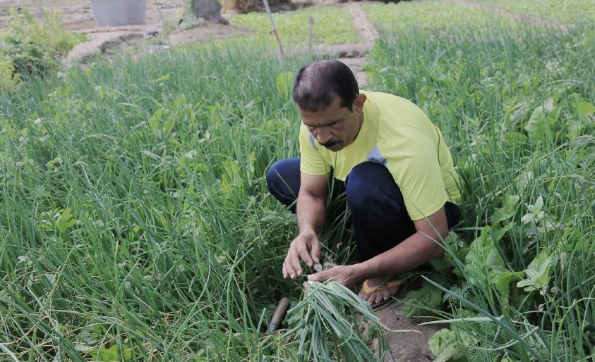 المزارع عبدالهادي النيسر: خيرات أرضنا لم تنضب - تصوير أحمد ال حيدر