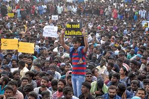 بالفيديو... تظاهرات في الهند ضد حظر مسابقة 'روديو' تقليدية للثيران