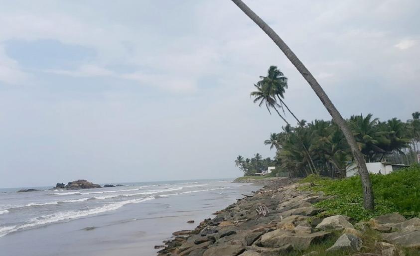 أشجار جوز الهندي تتدلى على طول السواحل في سريلانكا