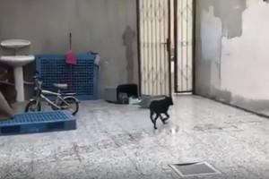 بالفيديو... أهالي سار الكلاب الضالة وصلت لمنازلنا... و'الرفق بالحيوان': الحل تخصيص أماكن لإيوائها