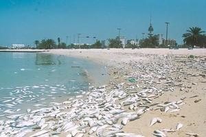 وزير الصحة الكويتي: المختبرات أثبتت سلامة عينات الأسماك المحالة من البلدية